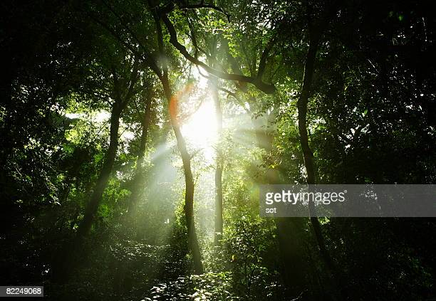 The light coming through the forest.