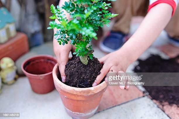 The little boy plant species.