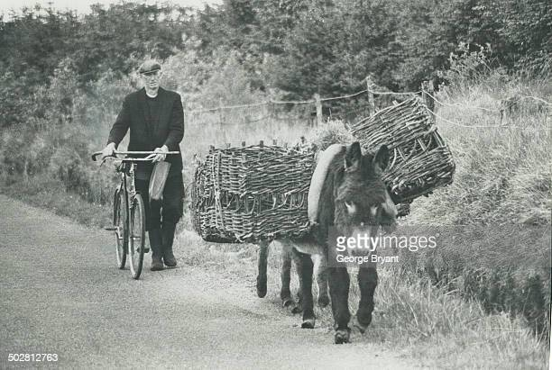 The little donkeys of Connemara and indeed of all Ireland are slowly dispappearing as mechanization takes over but there are still numbers of them...