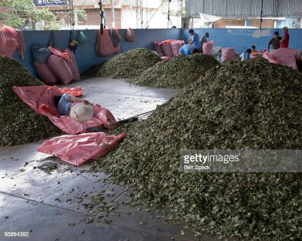 The local cooperative coca market in Eterazama Chapare Bolivia
