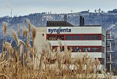 The logo of Swissbased maker of crop chemicals Syngenta is seen on February 4 2015 on a building of its plant in Stein Syngenta said on February 4 it...