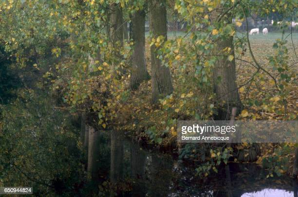 The Loir river winds through the town of IlliersCombray France Novelist Marcel Proust vacationed in the area as a child which became the basis for...
