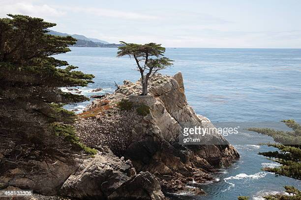 The Lone Cypress at 17 Mile Drive in Big Sur