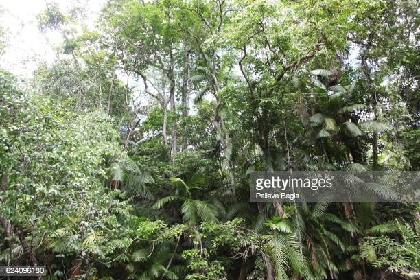 The lush virgin rain forests French Guiana is haven for plants and animals with ninety percent of the area under tropical rainforests the country has...