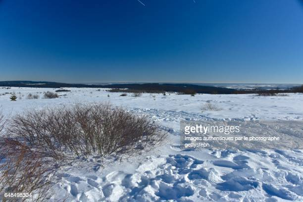 The main peat bog of Hautes-Fagnes in winter