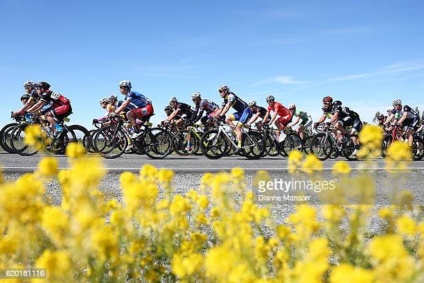 The main peloton makes its towards Coronet Peak from Mossburn during stage three of the 2016 Tour of Southland on November 02 2016 in Invercargill...