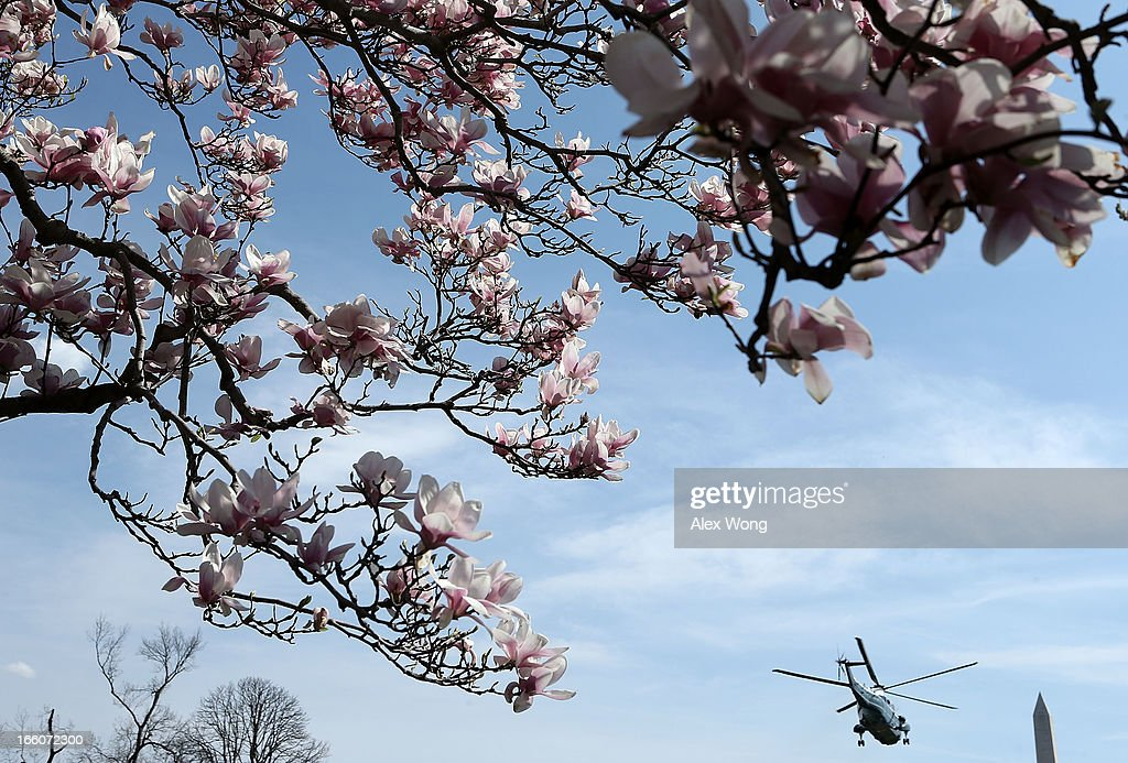 The Marine One, with U.S. President Barack Obama aboard, takes off from the White House April 8, 2013 in Washington, DC. President Obama was heading to Hartford, Connecticut to discuss gun control.