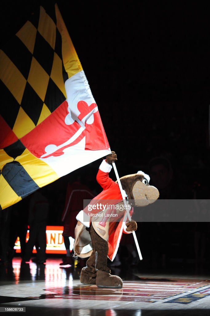 The Maryland Terrapins mascot on the court before a college basketball game against the Stony Brook Seawolfs on December 21, 2012 at the Comcast Center in College Park, Maryland.