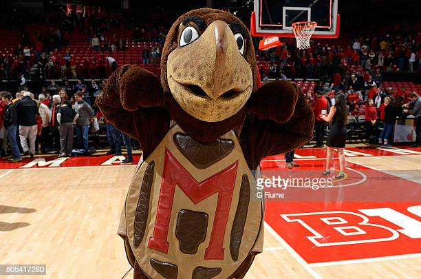 The Maryland Terrapins mascot performs after the game against the Ohio State Buckeyes at Xfinity Center on January 16 2016 in College Park Maryland
