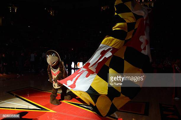 The Maryland Terrapins mascot performs during the game against the Penn State Nittany Lions at the Xfinity Center on December 30 2015 in College Park...