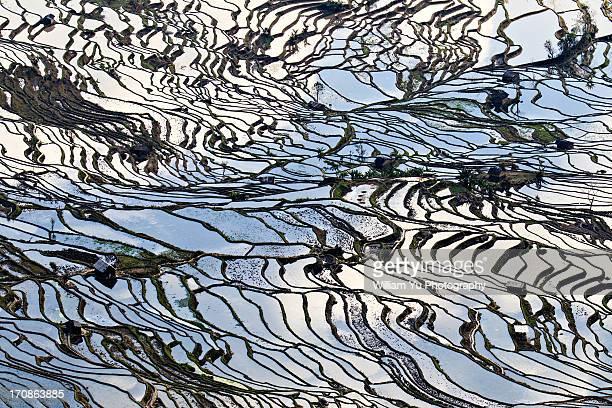The Matrix of Rice Patties