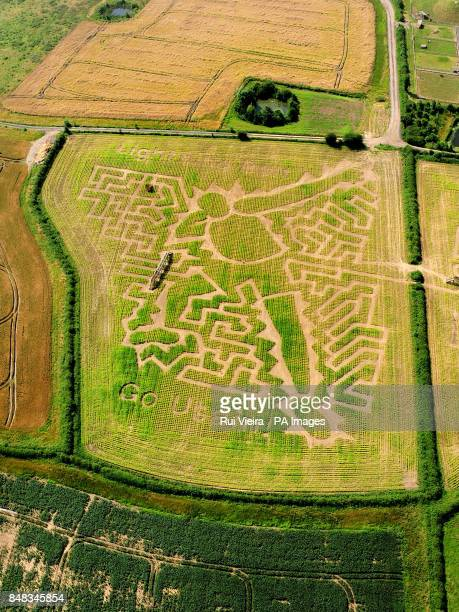 The maze created by Midlands farmer Tom Robinson as a tribute to Jamaican sprinter Usain Bolt in his 15 acre field of maize at the National Forest...