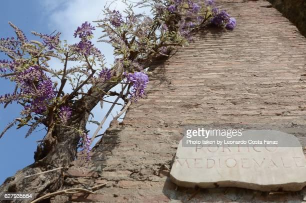 The Medieval Portico