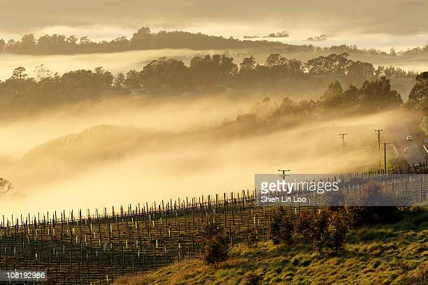 The mesmerizing view of Tamar Valley covered in morning fog Tamar Valley Tasmania Australia