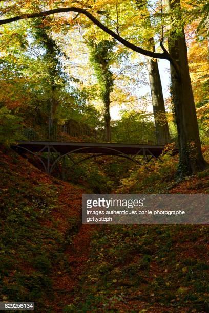 The metallic footbridge in middle woodland in autumn