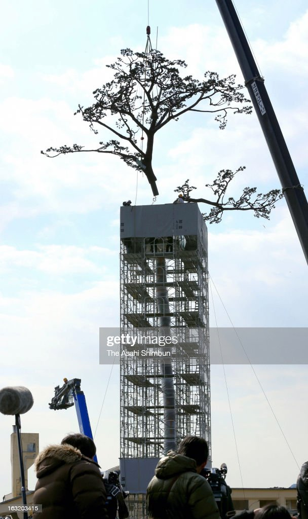 The Miracle Pine Tree, is reinstalled after preservation work on March 6, 2013 in Rikuzentakata, Iwate, Japan. Japan to mark second anniversary of the Magnitude 9.0 earthquake and following tsunami two years ago on March 11.