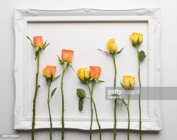The mixing of orange and yellow roses within the confines of a white picture frame