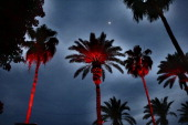 The moon and red palm trees are seen during day 1 of the 2014 Coachella Valley Music Arts Festival at the Empire Polo Club on April 11 2014 in Indio...