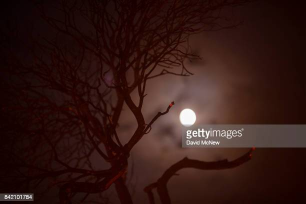 The moon shines behind the glowing remains of a burned bush at the La Tuna Fire on September 2 2017 near Burbank California Los Angeles Mayor Eric...