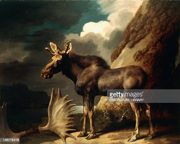 The Moose ca 1770 by George Stubbs oil on canvas Glasgow Hunterian Art Gallery University Of Glasgow