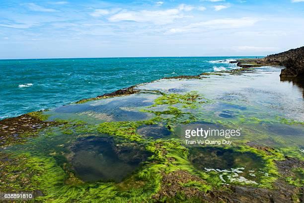 the moss growing on rocks