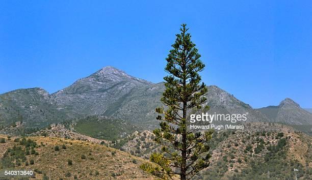 The mountains of Frigiliana, Spain