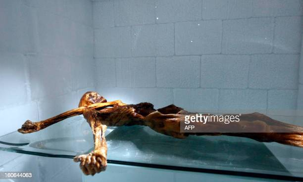 The mummy of an iceman named Otzi discovered on 1991 in the Italian Schnal Valley glacier is on display at the Archaeological Museum of Bolzano on...