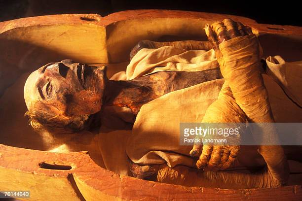 The mummy of Ramses II son of Sethy I in April 2006 at Cairo Museum Egypt The mummy was discovered with the other royal mummies in the Deir el Bahari...