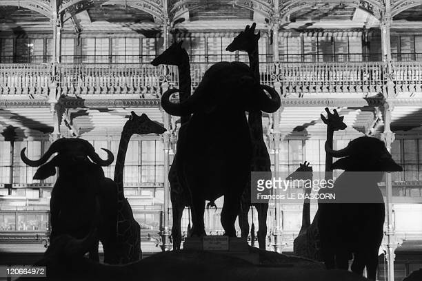The museum of natural history Jardin des plantes in Paris France in 1990 Restoration of the collections of the Museum of Natural History in the Grand...