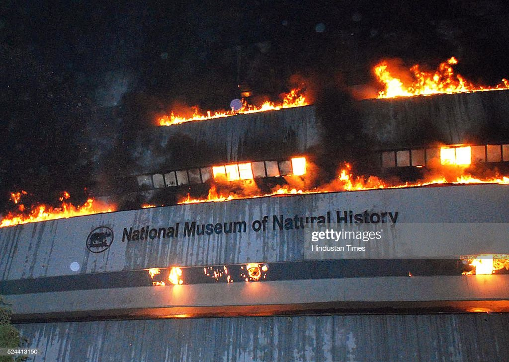 Fire breaks out at delhi natural history museum getty images for Facts about house fires