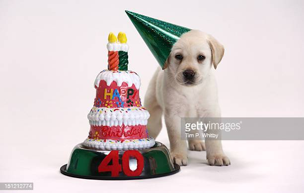 The nation's most loved brand icon the Andrex Puppy is today celebrating his 40th birthday with his very own Puppy Party To mark the occasion Andrex...