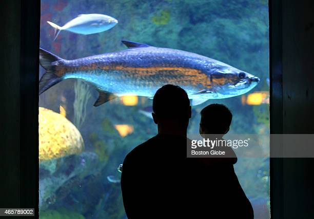 The New England Aquarium saw a substantial drop in attendance because of the major snowstorms that kept people out of the city A man and boy look at...