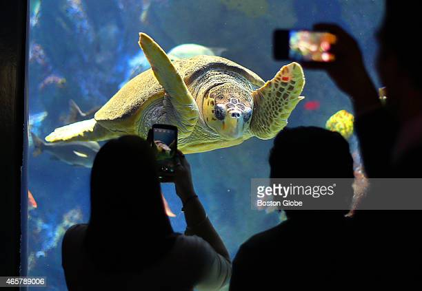 The New England Aquarium saw a substantial drop in attendance because of the major snowstorms that kept people out of the city People take photos of...