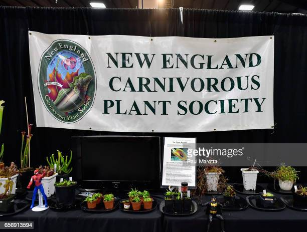The New England Carnivorous Plant Society display at the 2017 Boston Flower And Garden Show at Seaport World Trade Center on March 23 2017 in Boston...