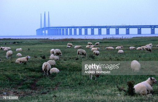 The new Oresund bridge between Malmo and Copenhagen from Bunkeflostrand, Malmo, Skane, Sweden, Europe