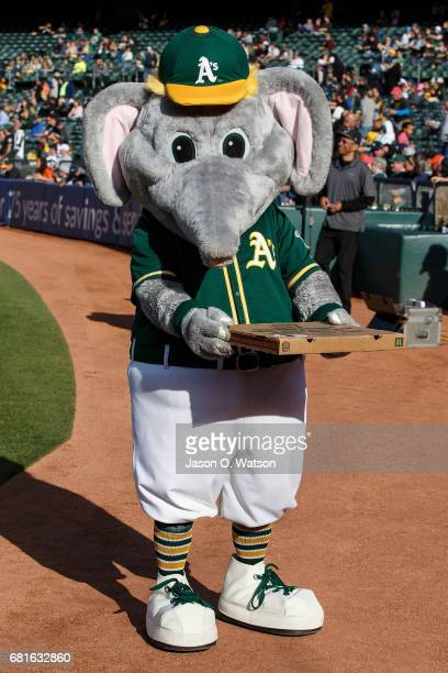 The Oakland Athletics mascot Stomper stands on the field with a pizza box before the game against the Detroit Tigers at the Oakland Coliseum on May 6...