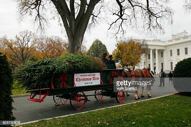 The official White House Christmas Tree is delivered to the White House in Washington DC on November 25 2016 The 19foot Douglas Fir was donated by a...