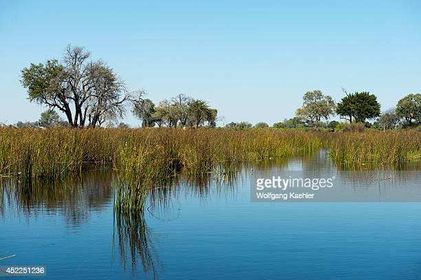 The Okavango Delta with papyrus in northern part of Botswana