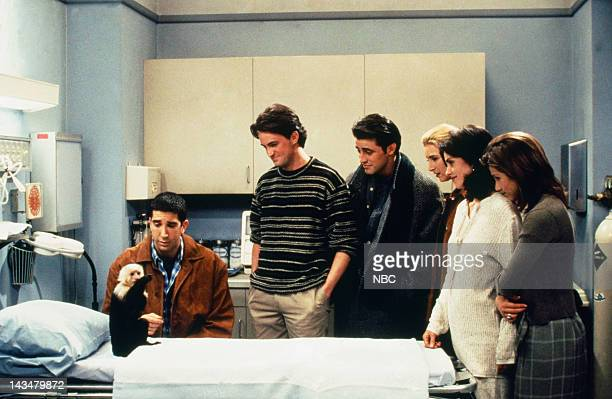 FRIENDS 'The One with Two Parts Part 1' Episode 16 Air Date Pictured Katie/Monkey as Marcel David Schwimmer as Ross Geller Matthew Perry as Chandler...