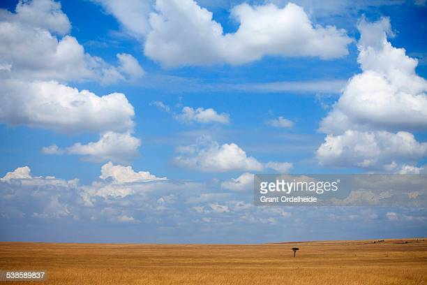 The open expanse of Kenyas Masai Mara.