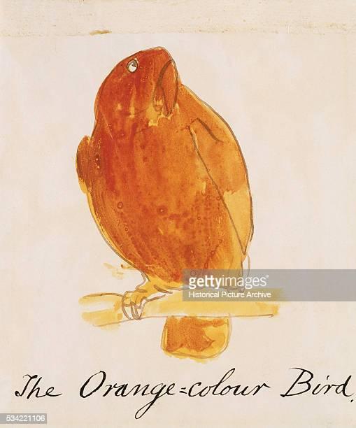 The Orange Colour Bird by Edward Lear