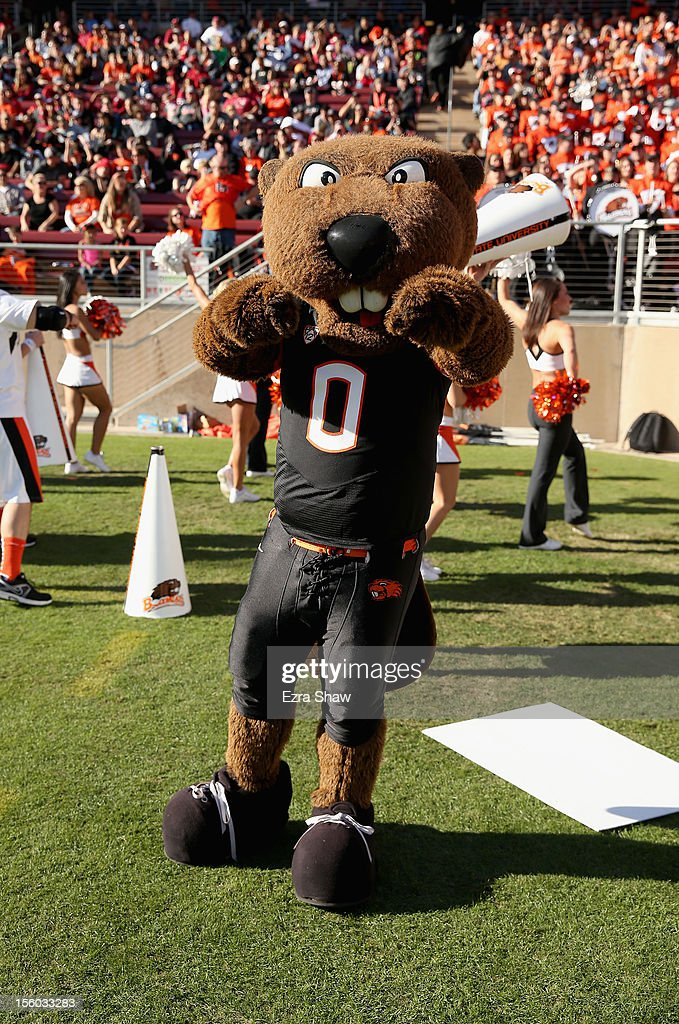 The Oregon State Beaver mascot on the sideline during their game against the Stanford Cardinal at Stanford Stadium on November 10, 2012 in Stanford, California.