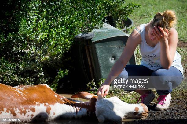 TOPSHOT The owner of a cow which drowned in floodwaters caused by Cyclone Debbie cries after the recovery effort to rescue it in North MacLean...