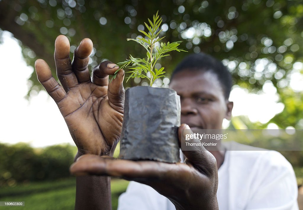 The owner of a tree nursery holds a small Grevillea Robusta tree on August 17, 2012, in Moro, Kenya. The tree nursery belongs to the Moro Self Help Group, a development aid project that should help people to get an additional income.
