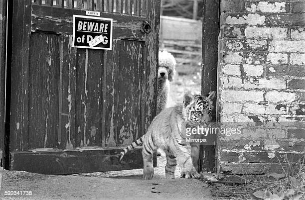 The owner of the cub worried that visitors may be unaware of the latest addition to the family has changed the sign on the gate to 'Beware of the...