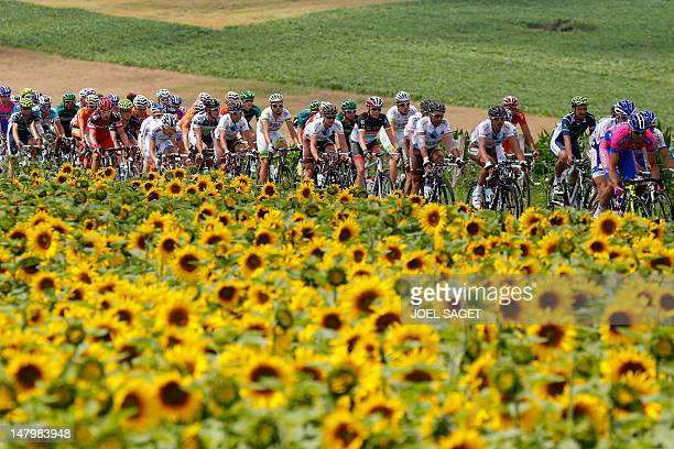 The pack rides past a field of sunflowers during the 199 km and seventh stage of the 2012 Tour de France cycling race starting in Tomblaine and...