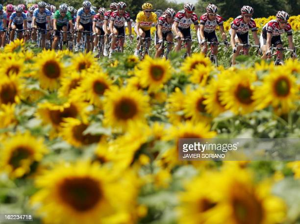 The pack rides past a field of sunflowers during the second stage of the 92nd Tour de France cycling race between Challans and Les Essarts 03 July...