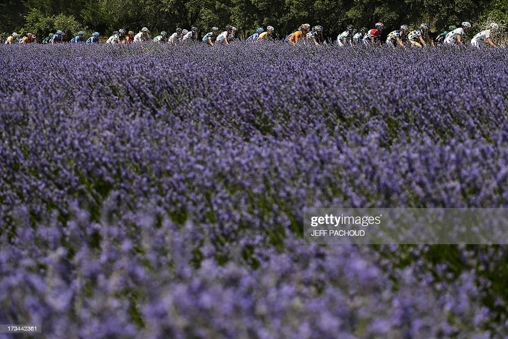The pack rides past a lavender field during the 242.5 km fifteenth stage of the 100th edition of the Tour de France cycling race on July 14, 2013 between Givors and Mont Ventoux, southeastern France. AFP PHOTO / JEFF PACHOUD