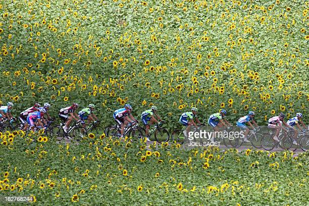 The pack rides past a sunflower field during the sixth day in a row on the podium of the fifth stage of the 94th Tour de France cycling race between...