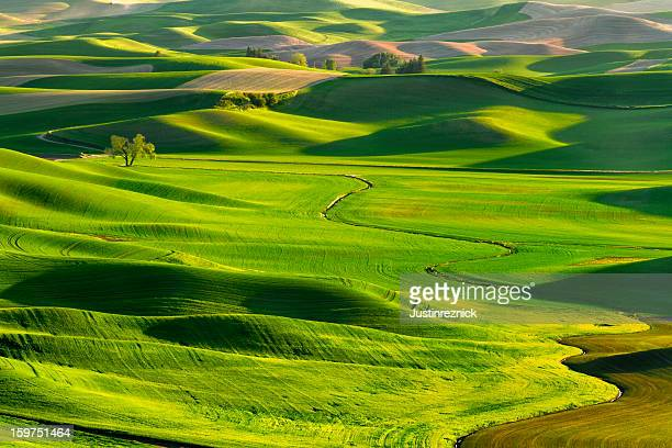 The Palouse Rolling Hills